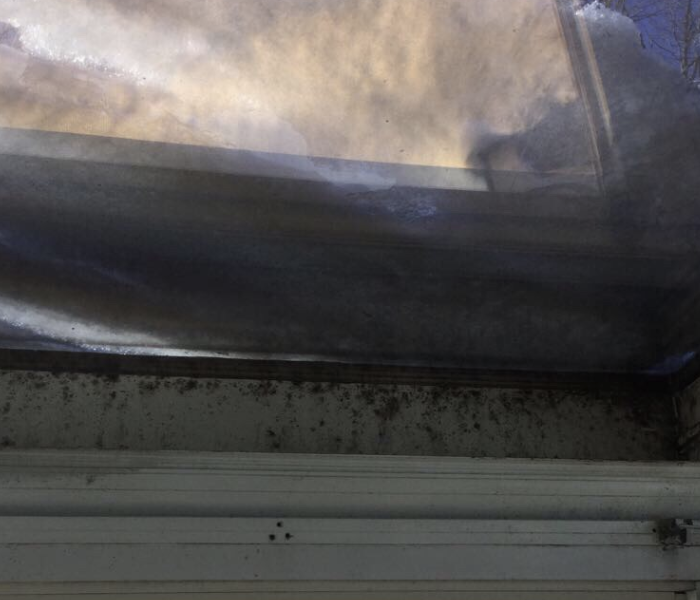 Have You Checked Your Sunroom for Mold?