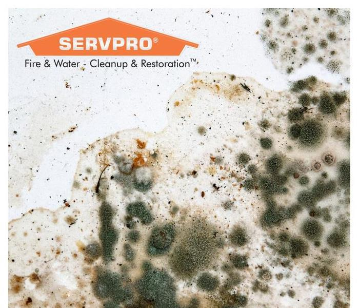 Mold growth on white surface